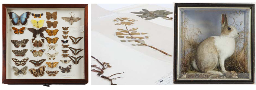 A selection of exhibits from the Craven Museum collections.
