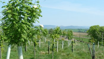 Thousands of trees to be planted on Craven District Council land